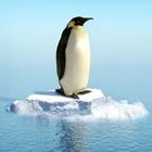 google-penguen